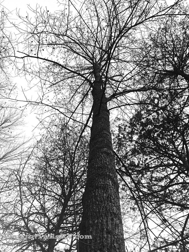 B@W,Tree