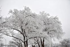 Frozen Fog 2