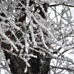 Frozen Fog 4