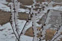 Frozen Fog 5